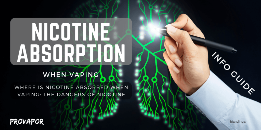 this image has the words Where is Nicotine Absorbed When Vaping: The Dangers of Nicotine against a background with a green lung and a hand with a pointer.