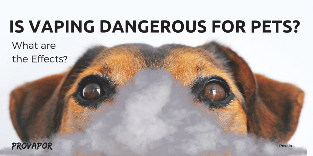 "Banner Image with overlay ""Is Vaping Dangerous for Pets? What are the Effects"" with a dog in the background."