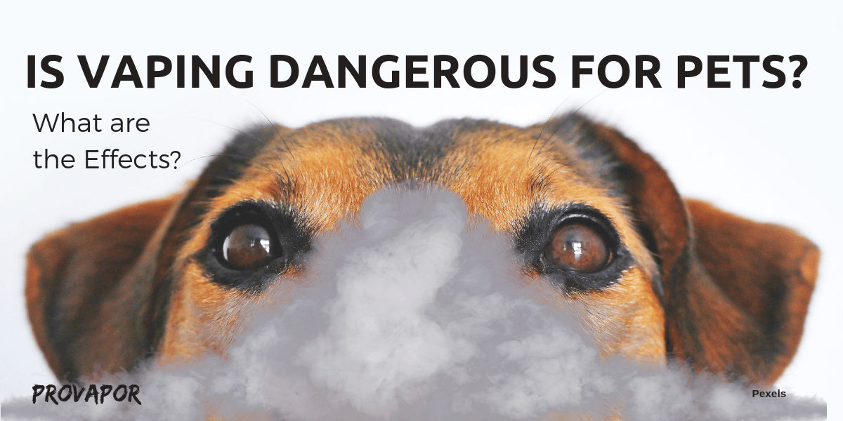 """Banner Image with overlay """"Is Vaping Dangerous for Pets? What are the Effects"""" with a dog in the background."""